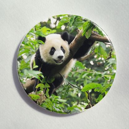"Button ""Pandabär"""