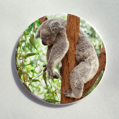 "Button ""Koalabär"""