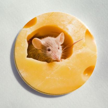 """Button """"Maus im Käse"""""""